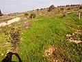 Ezor Lod, Israel - panoramio (7).jpg