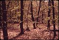 FOREST OF BEECHES AND MAPLES - NARA - 547643.jpg