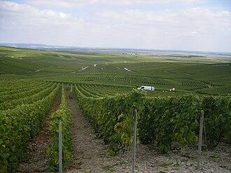 Champagne-Ardenne - Vineyard in Champagne-Ardenne.