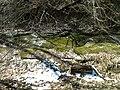 Fall Run Park in Shaler Township, late winter - 16.jpeg
