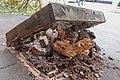 Fallen Tree in Dormer Place, Leamington Spa (4).jpg