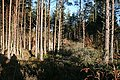 Fallen Trees - geograph.org.uk - 290301.jpg