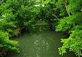 Falling-water-river-poplar-grove-rd-tn1.jpg