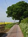 Farm road, Willesley Warren - geograph.org.uk - 809795.jpg