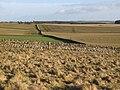 Farmland, Torney's Fell (3) - geograph.org.uk - 1138705.jpg