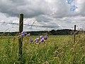Farmland off Millbrook Lane - geograph.org.uk - 502109.jpg