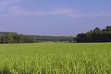 Uzak ufukta kentsel binalarla ormanlık alanlarla çevrili, metrelerce yükseklikteki çimenlere benzeyen yeşil bir bitki alanı