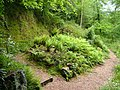 Fernery, Saltram House - geograph.org.uk - 176794.jpg