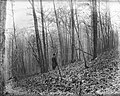 File--C5235-CC5244- Mine Brook, NJ (1efe9106-510e-43a7-8ae0-c88a5f22b9d0).jpg