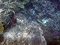 Fish 22 (30997140805).jpg