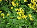 Fleurs Croze (2).jpg