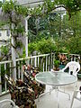 Flickr - brewbooks - Wisteria on our Deck - May, 2008.jpg