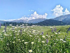 Gulmarg Wildlife Sanctuary.jpg Florası