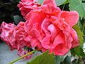 Flora vo Polog (40).JPG