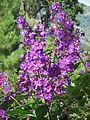 Flores Caripe 2.JPG