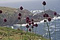 Flores na Illa de Ons.jpg