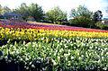 Floriade Canberra 2013.jpg