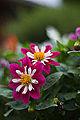 Flower (4429063864).jpg