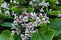 Flower 201 (30921919756).jpg