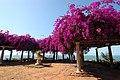 Flowered Maputo.jpg