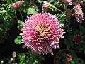 Flowers (104).JPG