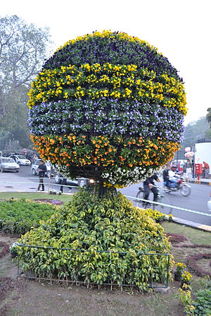 The Mall, Lahore - Flowers on the Mall