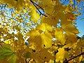 Foglie in autunno.jpg