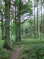 Footpath through Eymore Wood - geograph.org.uk - 493446.jpg