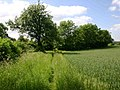 Footpath to Drayton from Shottery - geograph.org.uk - 1911376.jpg