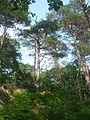 Forêt de Fontainebleau 4 - A P1210802 LV.JPG