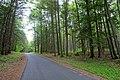 Forest - Northfield Mount Hermon School - DSC06587.jpg