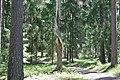 Forest above Ērgļu klintis.jpg