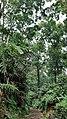 Forest at Mount Bunder.jpg