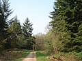 Forest track in Queen's Wood - geograph.org.uk - 454548.jpg