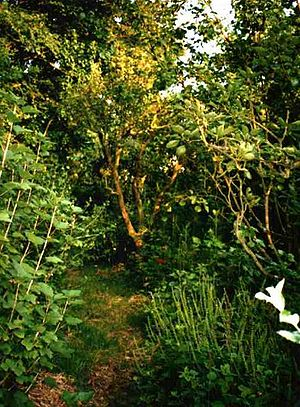 English: Photo of Robert Hart's forest garden ...