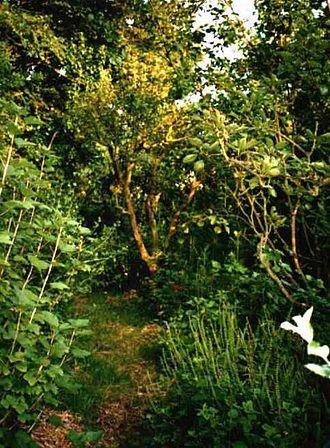 Forest gardening - Robert Hart's forest garden in Shropshire