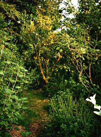 History of gardening - Robert Hart's forest garden in Shropshire, England.