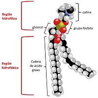 Introdução à Biologia Célula Estrutura E Organização Da