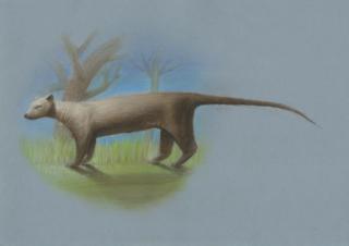 <i>Cryptoprocta spelea</i> Extinct species of carnivoran from Madagascar