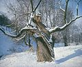 Fotothek df ld 0003063 001a Bäume.jpg