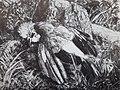 """Fréset, lithographie """"L'oiseau mort"""", 1955.jpg"""