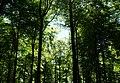 Frühlingswald im Nationalpark Hunsrück-Hochwald.jpg