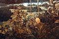 Frans post, paesaggio con boa constrictor, 1660 ca. 14.JPG