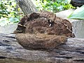 Fungi-105-xavier cottage-yercaud-salem-India.jpg