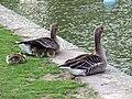 Gans-enge-wohnung-22-04-2009-001.jpg