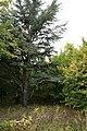 Garden-abandoned-20-years-6.jpg