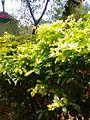 Garden at saraswathi illam,palavangudijpg 24.jpg
