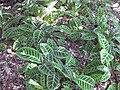Gardenology.org-IMG 0469 rbgs10dec.jpg