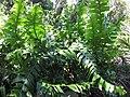 Gardenology.org-IMG 0507 rbgs10dec.jpg