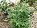Gardenology.org-IMG 7650 qsbg11mar.jpg